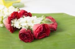 Rose closeup flower floral beauty nature concept Stock Photo