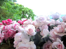 Rose of cloth artificial flower Stock Photography