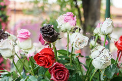 Rose coated by chocolates  in flower festival Stock Photos