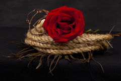 Rose on coiled rope Stock Images