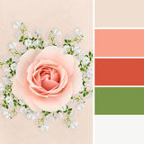 Rose collage with color swatches Stock Photos