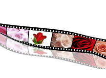 Rose collection on film strip. Rose collection on old film strip Royalty Free Stock Images