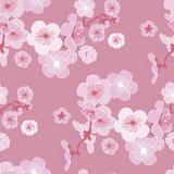 Rose color cherry blossom Stock Photos
