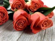 Rose colorate corallo immagini stock