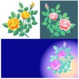 Rose coloreó Fotografía de archivo