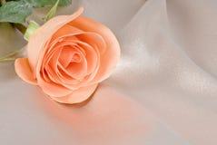 Rose coloreada melocotón en fondo amarillento del satén Fotos de archivo