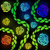 Rose. Colorful roses on a black background. Vector Graphics Royalty Free Stock Photos