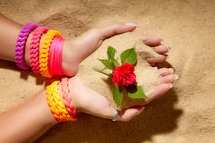 Rose. Colorful Summer Complements Royalty Free Stock Photography