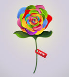 Rose Colorful Royalty Free Stock Images