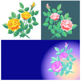 Rose coloured. Set of vector coloured roses, greeting card Stock Photography