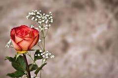 Rose con Copyspace Foto de archivo