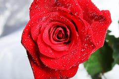 Rose con gotas Imagen de archivo