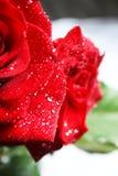 Rose con gotas Foto de archivo libre de regalías