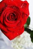 Rose con gotas Imágenes de archivo libres de regalías