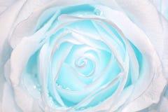Rose con la luz azul Fotos de archivo libres de regalías