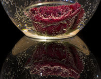Rose con las burbujas en agua Imagen de archivo