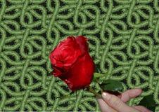 Rose con las espinas Fotografía de archivo libre de regalías