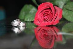 Rose con los anillos Fotografía de archivo