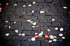 Rose confetti Stock Image