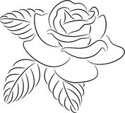 Rose contour Stock Photos