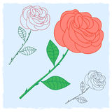 Rose. Contour flower roses. Floral decor Stock Photography