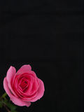 Rose in the Corner Royalty Free Stock Image