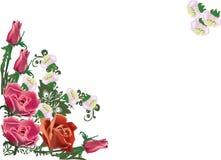 Rose corner decoration on white Stock Photo