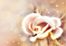 Rose covered by hoarfrost. Rose on a beige background with effect of hoarfrost Royalty Free Stock Image