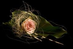 Rose crème sur la lame verte Photos libres de droits