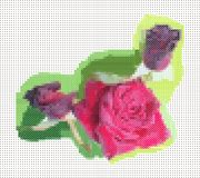 Rose. Cross-stitch on canvas. Imitation hand embroidery Stock Image