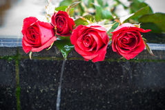 Rose and cry, Heartbroken concept. Red rose on edge of waterfall, Love and heartbroken concept Stock Image