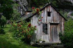 Rose cubrió la cabaña Fotos de archivo