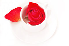 Rose in cup Royalty Free Stock Image