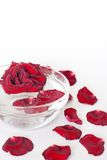 Rose in cup. And petals on white background Stock Photography