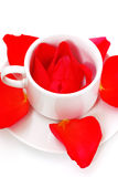 Rose in cup with petals Royalty Free Stock Photos