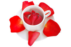 Rose in cup with petals Stock Photo