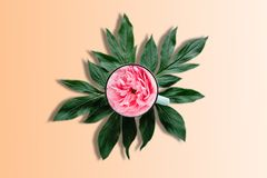 Rose in a cup of tea. A concept of useful herbal tea. My creative idea and art work. Stock Photo