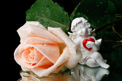 Rose and cupid. Royalty Free Stock Photography