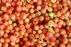 Rose Currants Stock Photos