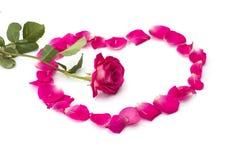 Rose d'écarlate au chiffre centre de cercle des lobes des roses Images libres de droits