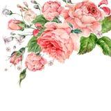 Rose d'annata di inglese di rosa dell'acquerello illustrazione vettoriale