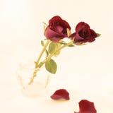 Rose d'annata per il biglietto di S. Valentino della st Immagine Stock