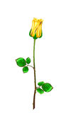 Rose d'or de tige et feuilles sur un fond blanc Vecteur IL Images libres de droits