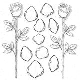 Rose d'isolement et pétales faits main dans le style de croquis Fleur de croquis Images stock