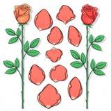 Rose d'isolement et pétales faits main dans le style de croquis Fleur de croquis Photo stock