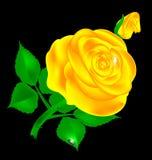 Rose d'obscurité et de jaune illustration stock