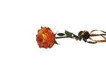 Rose d'orange d'isolement sur le fond blanc Images stock