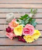 Rose dal giardino Immagini Stock Libere da Diritti