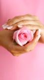 Rose dans des mains Photographie stock