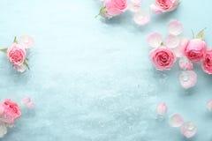 Rose dans l'eau photos stock